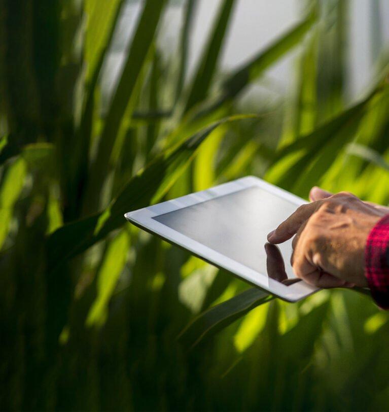 ILPF Conecta divulga vencedoras do desafio de soluções inovadoras para sistemas integrados de produção