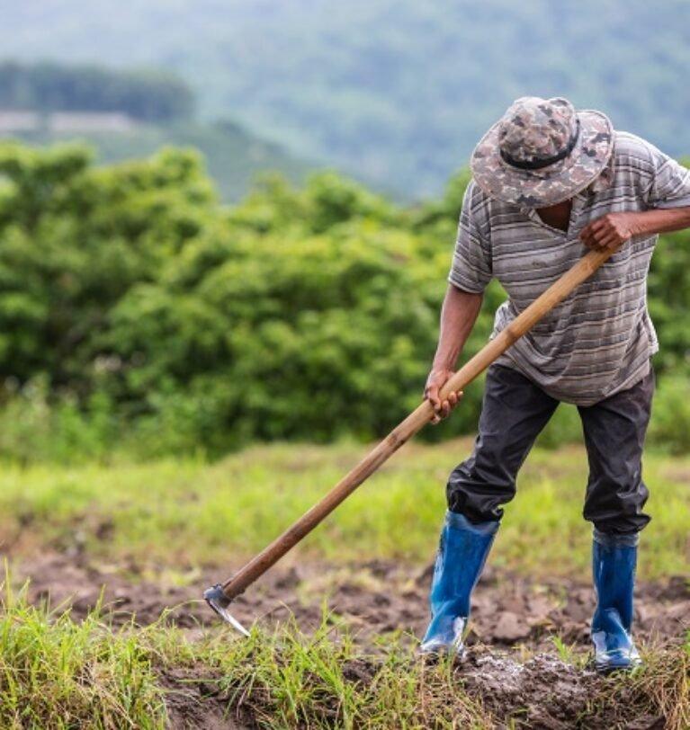 Nanopartícula pode melhorar desempenho de fertilizantes e defensivos agrícolas-weglot
