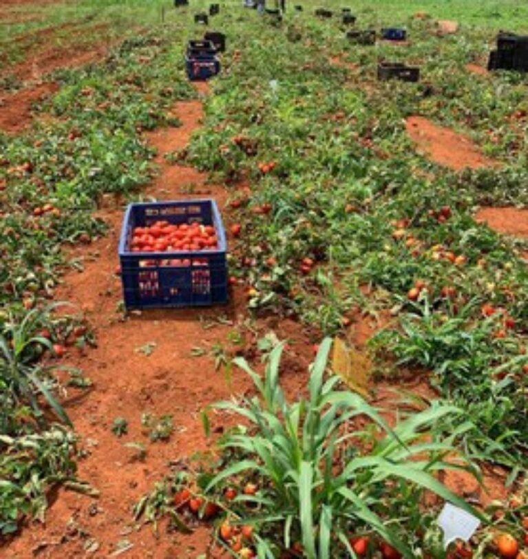 Nanotecnologia brasileira: mais produtividade da agricultura